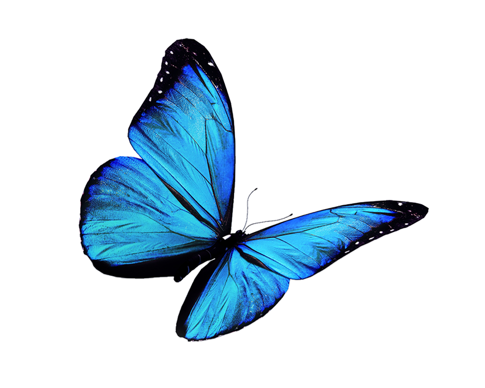 Flight-of-Passion-butterfly